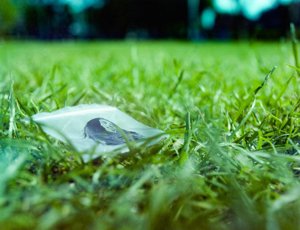 grass on grass.jpg
