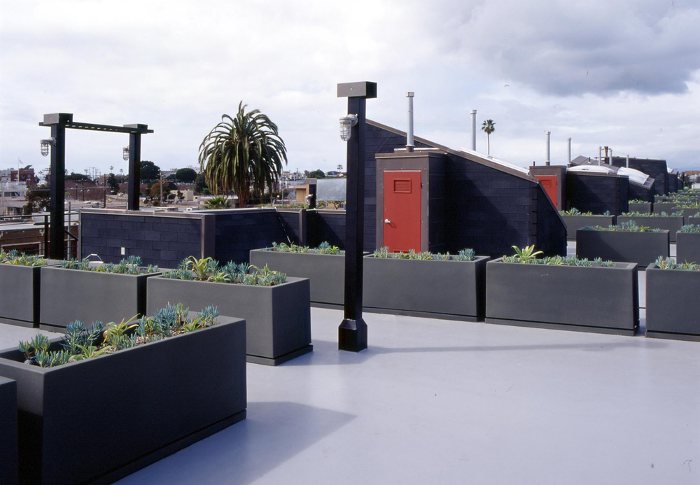 View across the roof deck showing the use of planter boxes to demarcate the space of each unit.