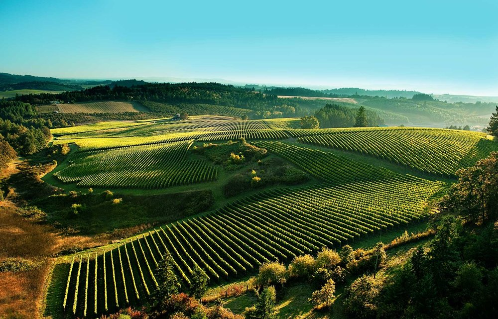 shea-vineyard-overhead.jpg