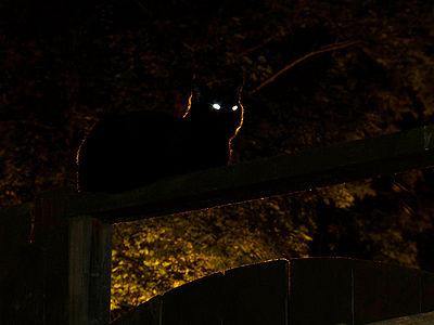 400px-Cat_Night.jpg