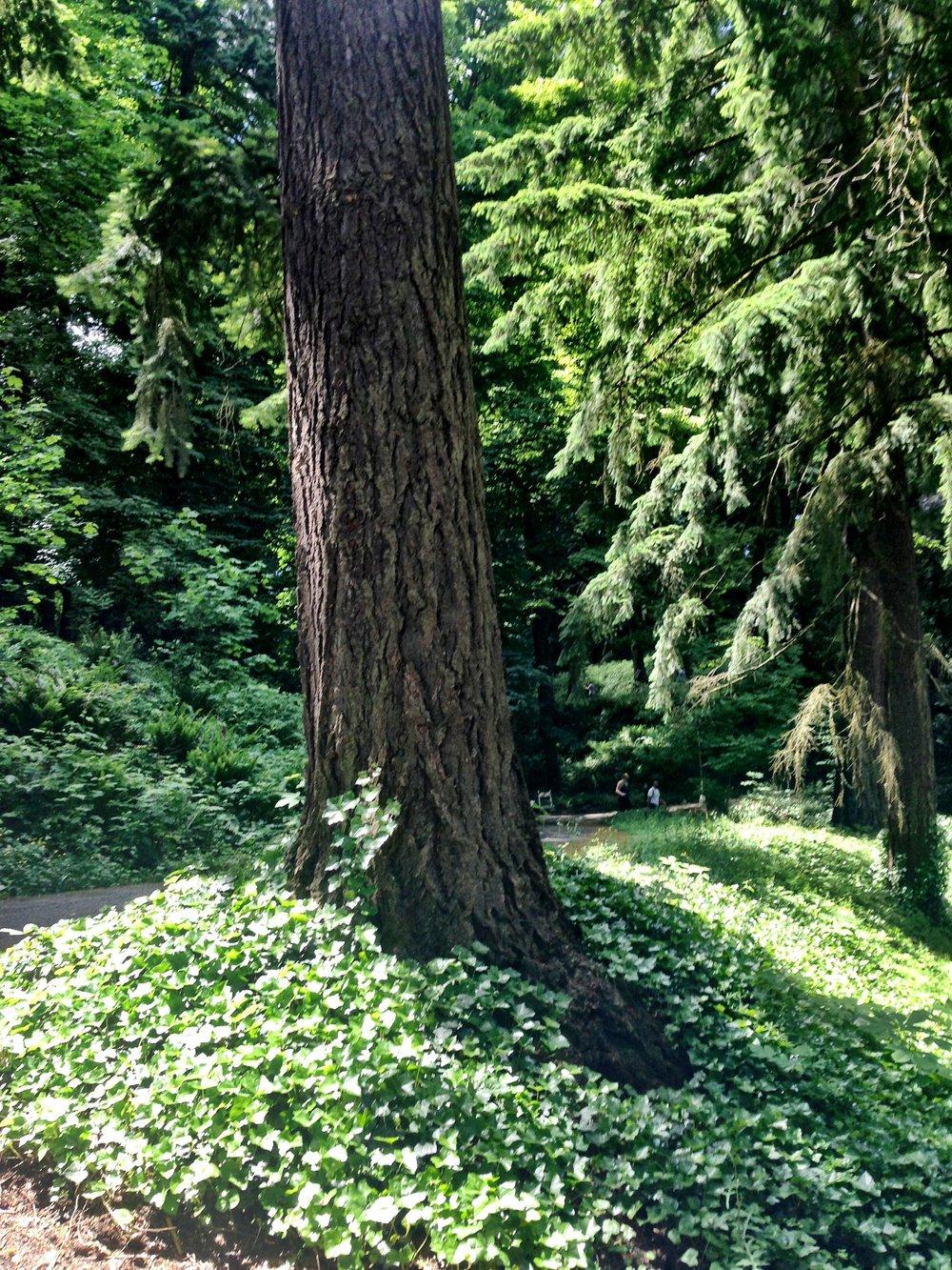 Big tree Japanese Gardens