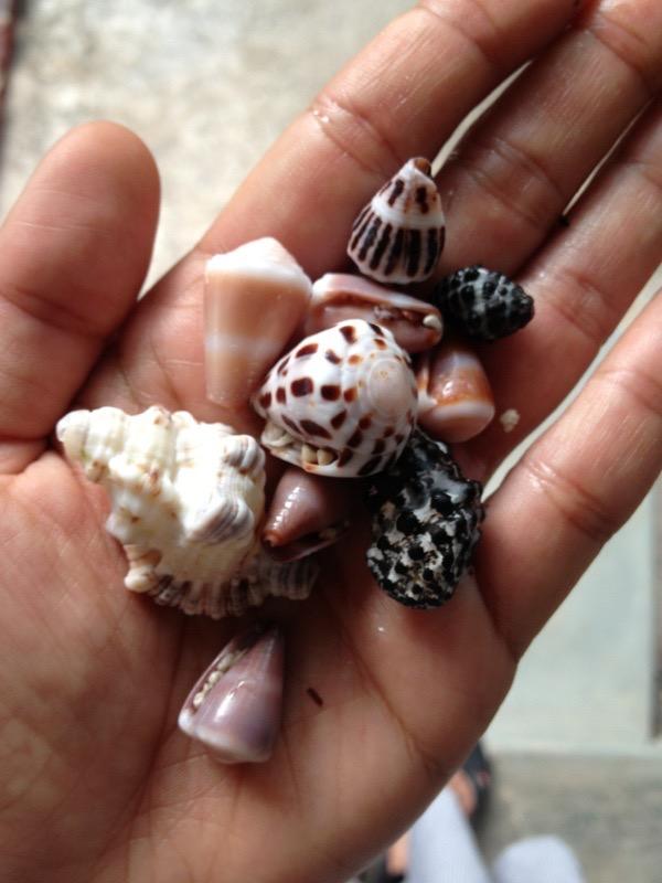 Miniature Shells found on the beach in Zanzibar.