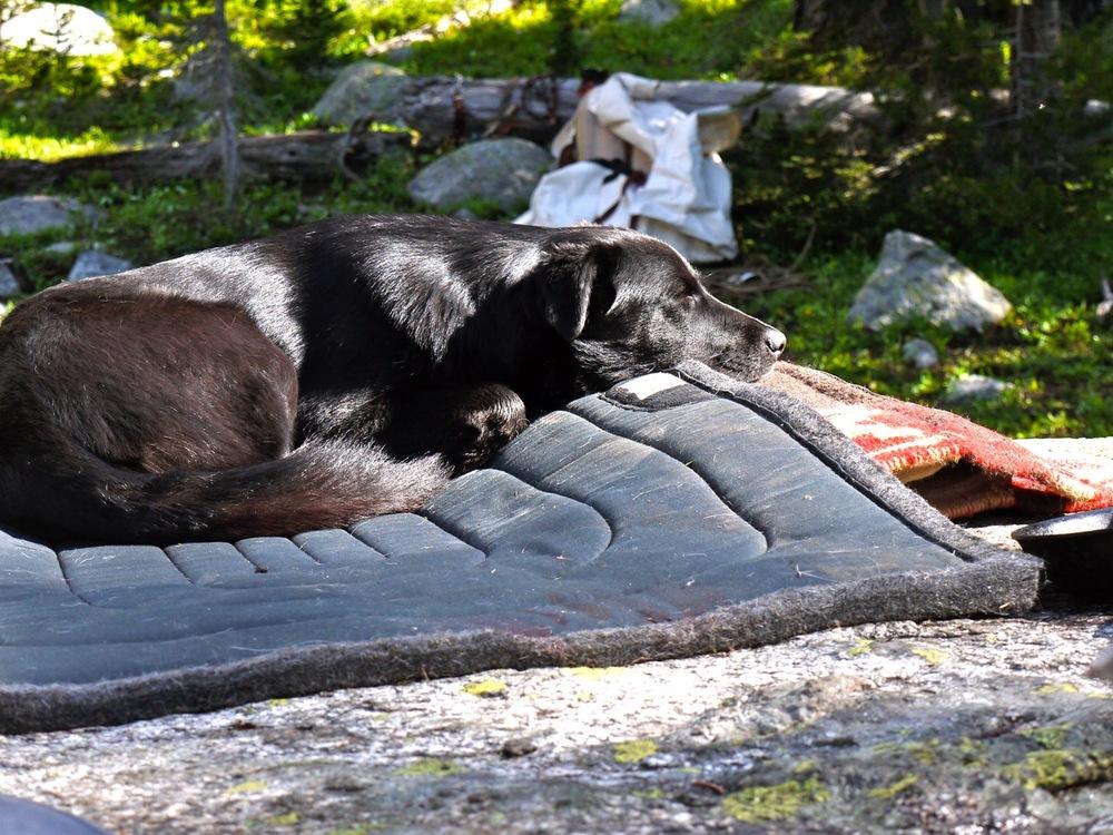 Boots the dog sleeps on a horse blanket near Mount Cowen. Absaroka Range, Montana. (Photo by Emily Stifler Wolfe)
