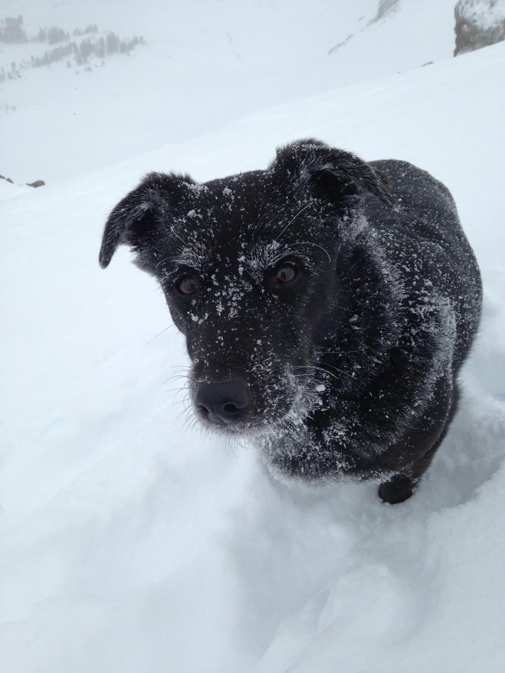 Powder hound. Cooke City, Montana. (Photo by Emily Stifler Wolfe)