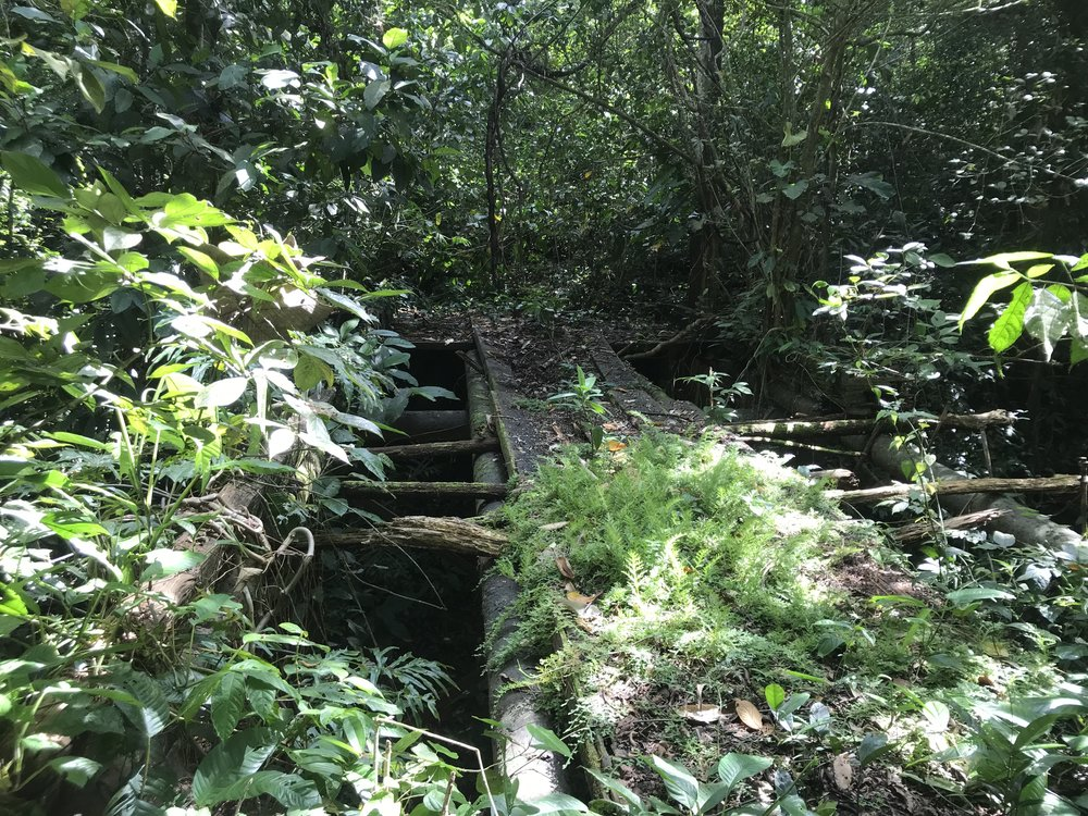 Welcome to the Jungle. Yes, that is a bridge. Yes, we do have to cross it. Yes, it IS rotten and very high up.