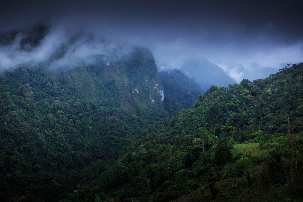 Jungle mornings. Photo: James Appleton