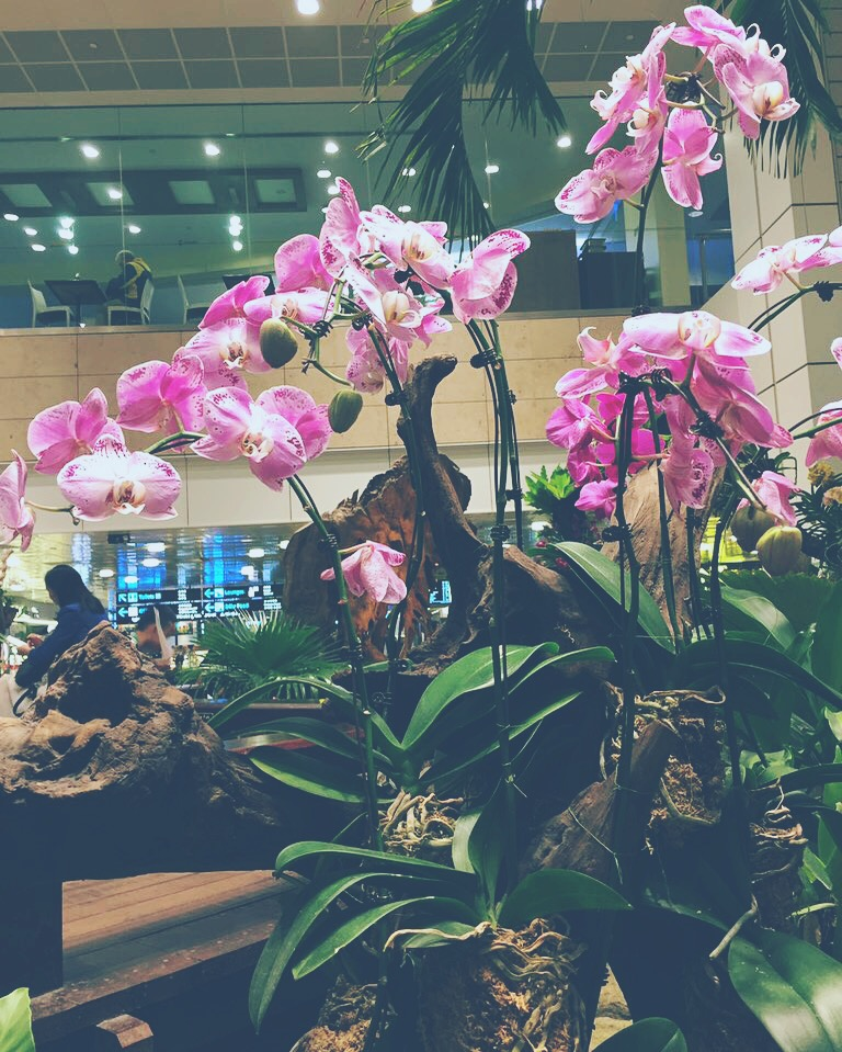 Orchid Garden in Changi, Singapore Airport. The perfect balance of water and earth and air.