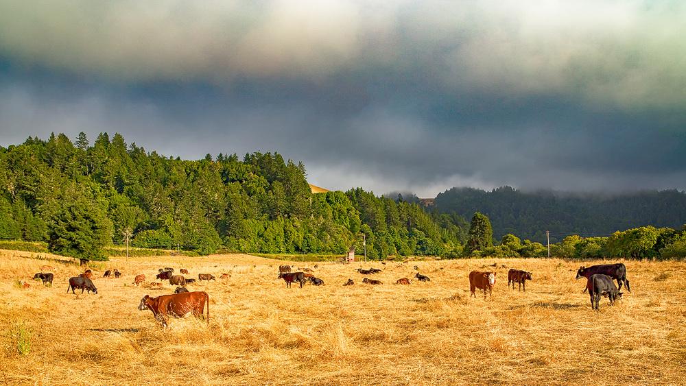 Casini-Cow-Pasture_IMG_1312.jpg