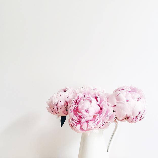 pink_peony2.jpg