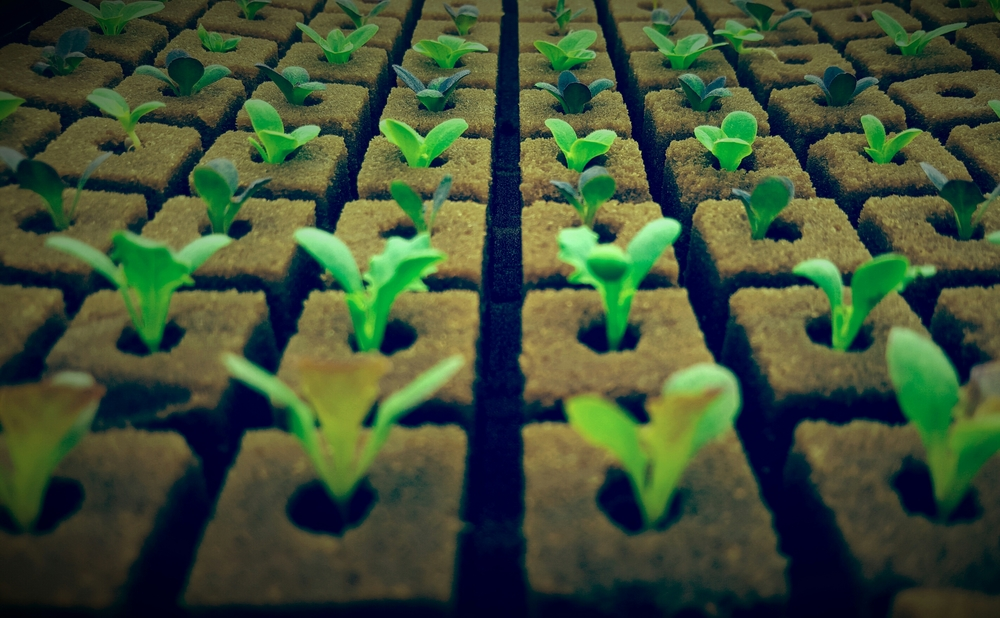 seedlings 2.jpg