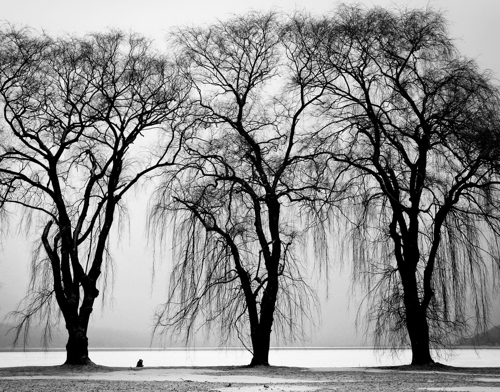 black-and-white-trees-winter-branches.jpg