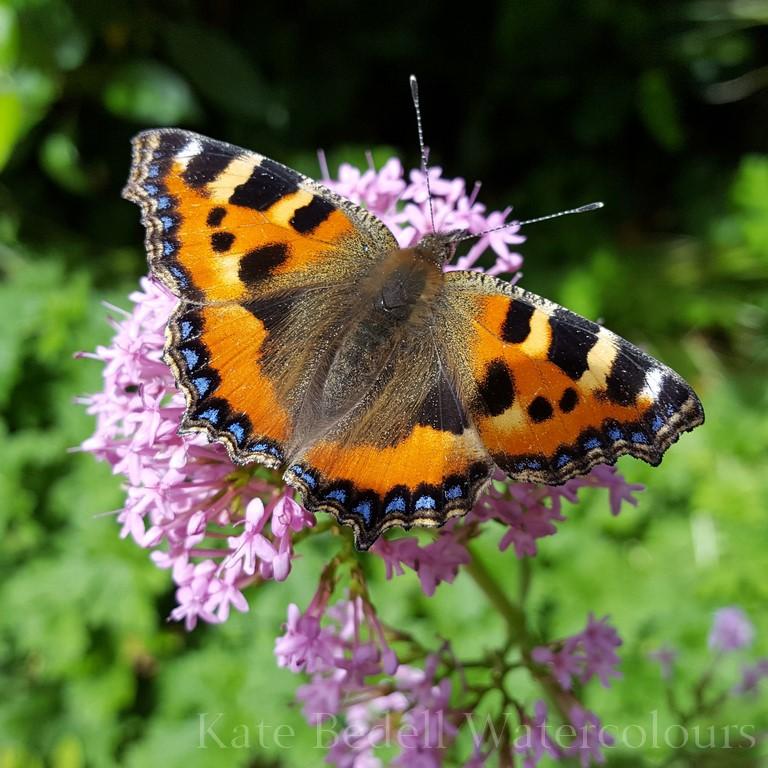 Tortoiseshell Butterfly (Copy).jpg