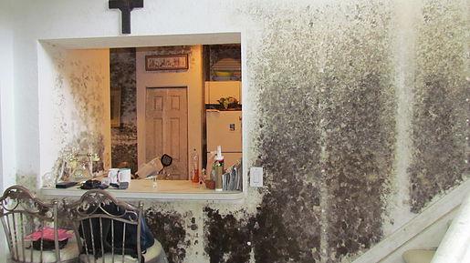 mold-remediation.jpg