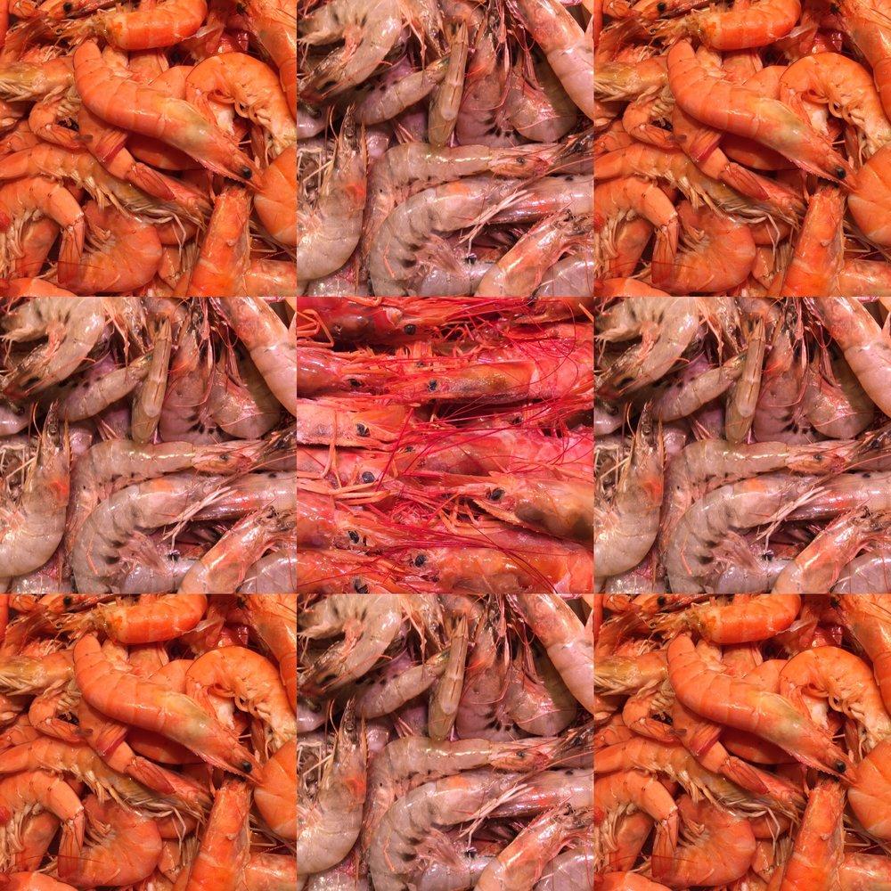 all the shrimp