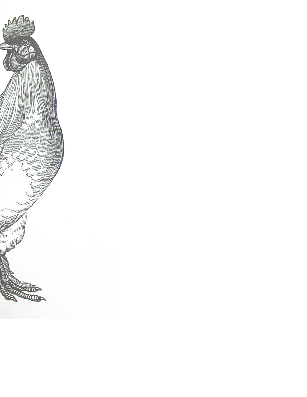 ROOSTER_02_LO_RES.jpg