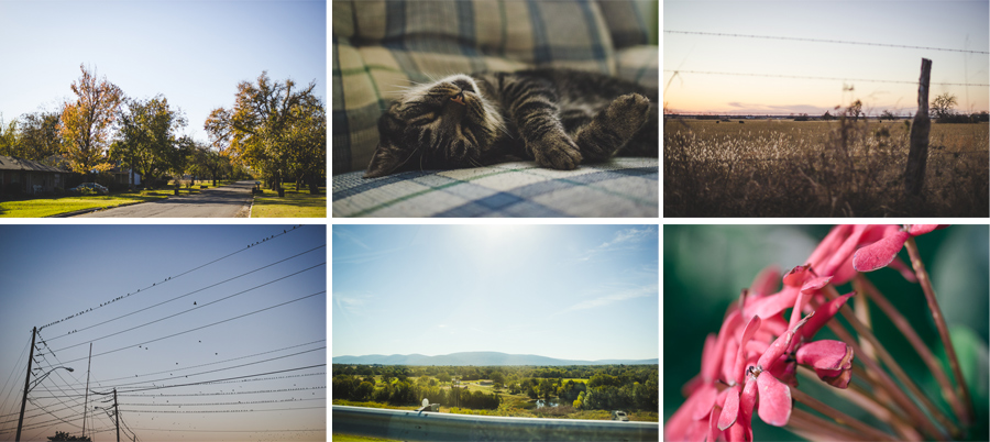 Megan Schreurs Photography