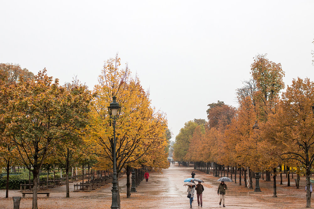 Paris Tulleries in the Rain