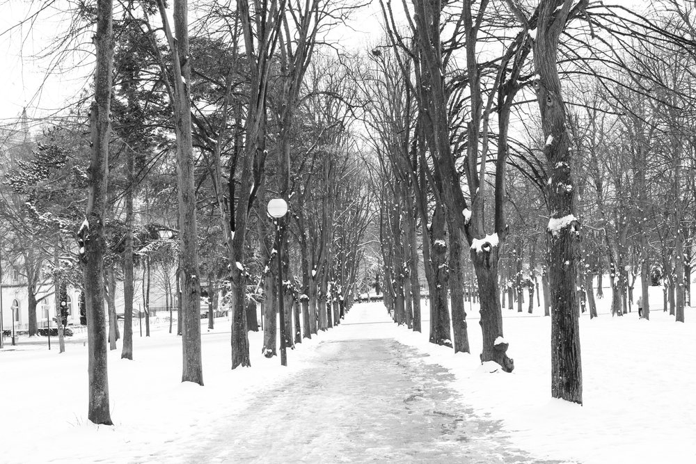 snowy path in paris @rebeccaplotnick