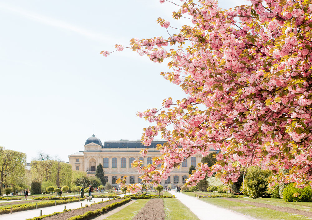 Jardin des Plantes in Bloom