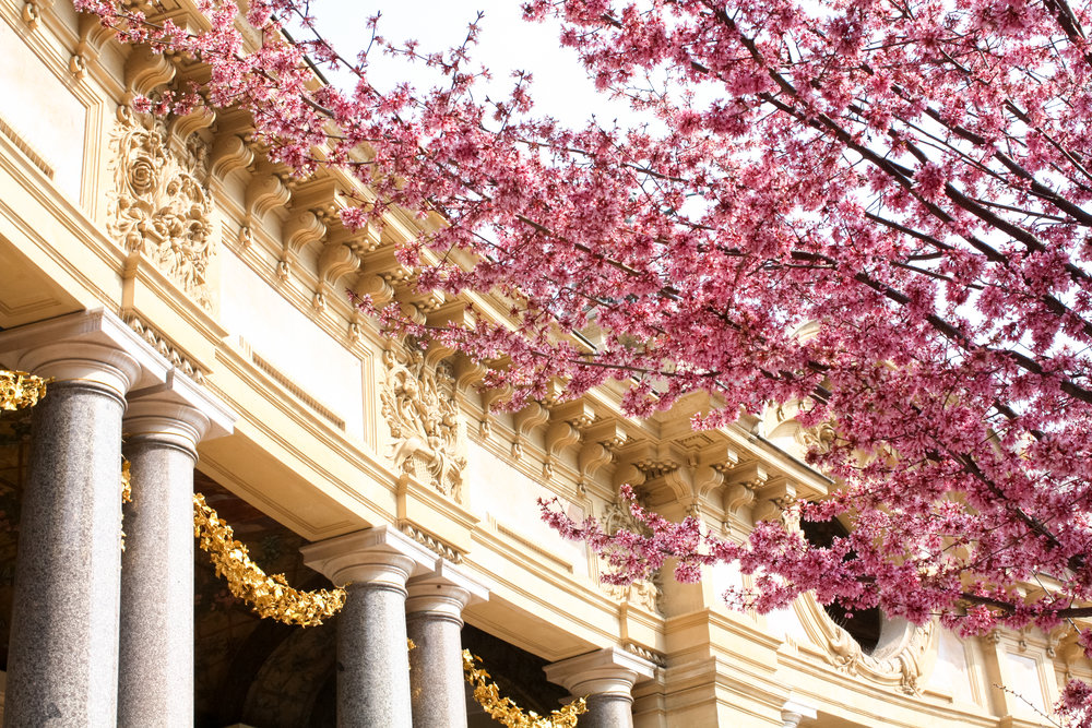 Petite Palais filled with Cherry Blossoms