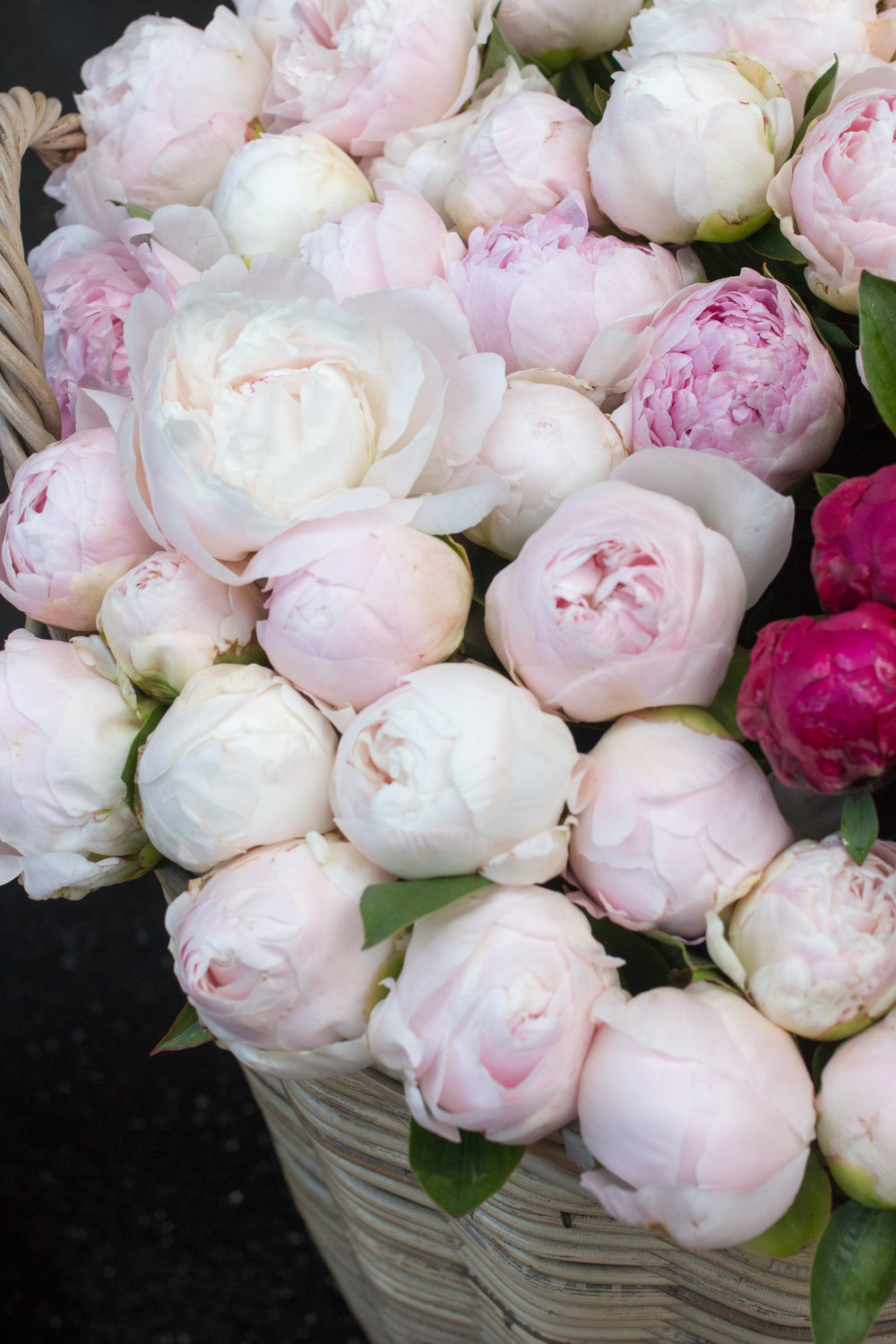 peony season in paris. pink peonies by rebecca plotnick