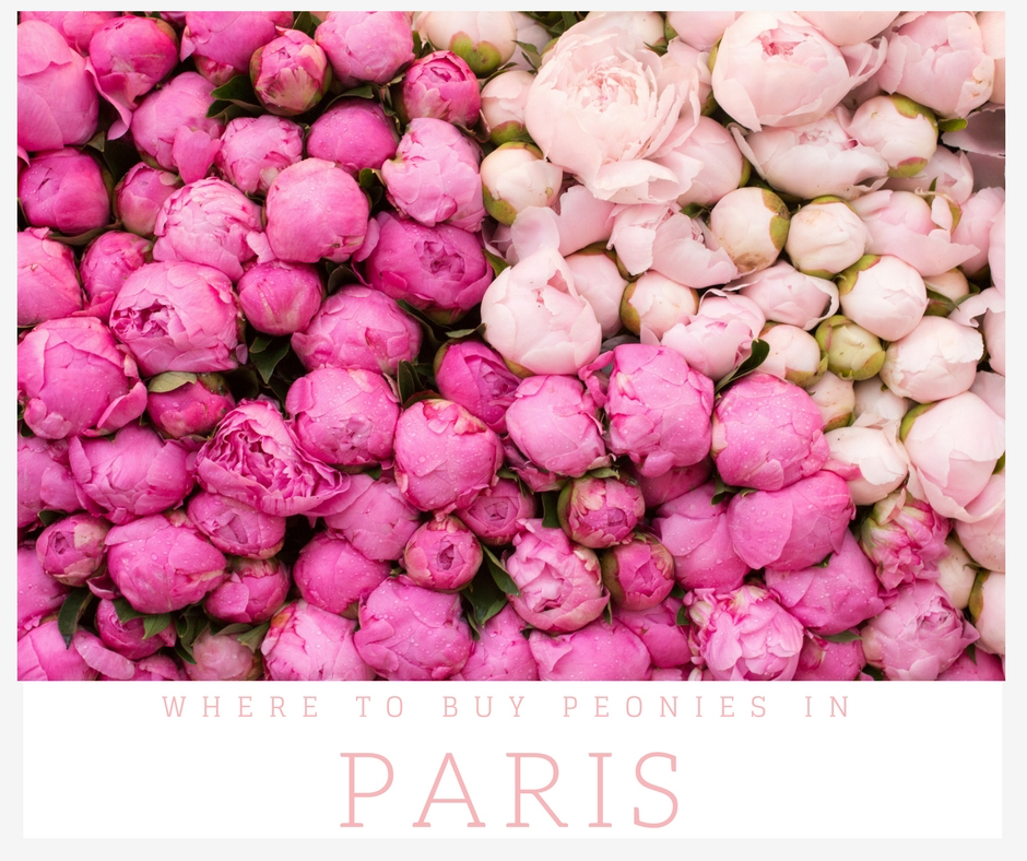 where to find peonies in paris, france by everyday parisian