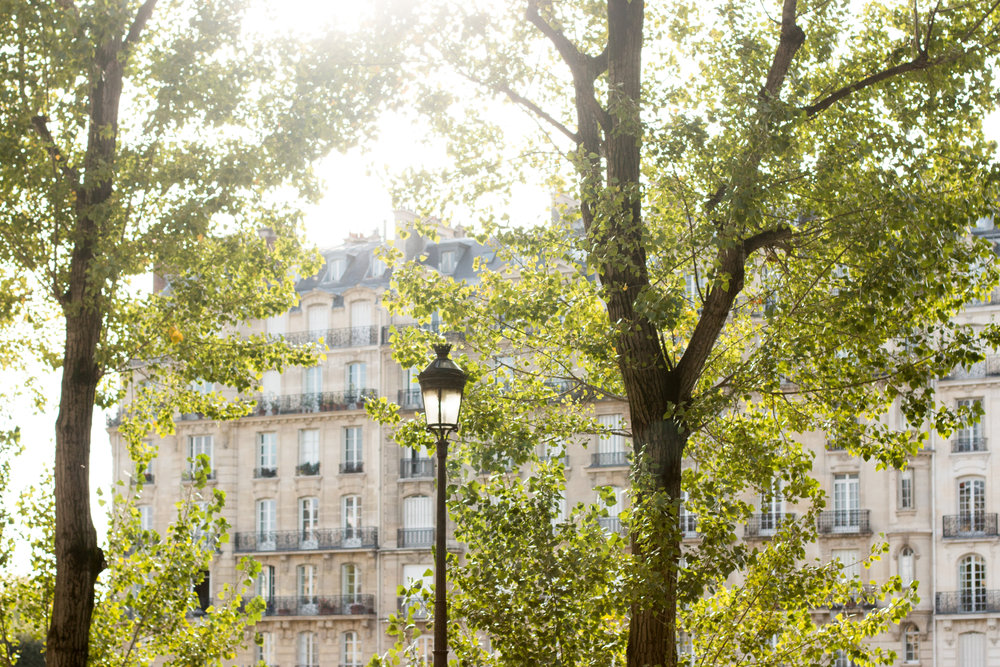 paris in the fall by rebecca plotnick