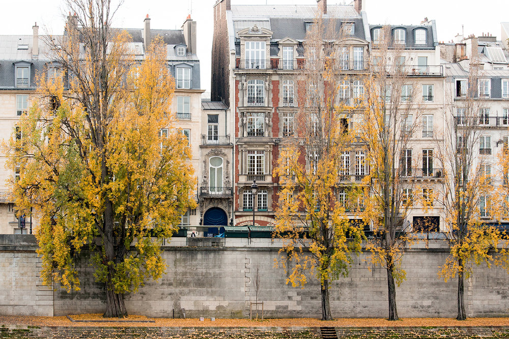 paris in the fall by rebecca plotnic