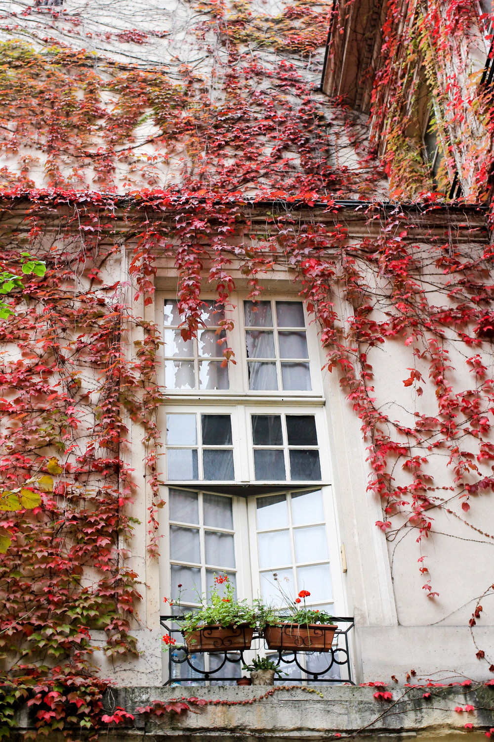 fall in paris, france by rebecca plotnick