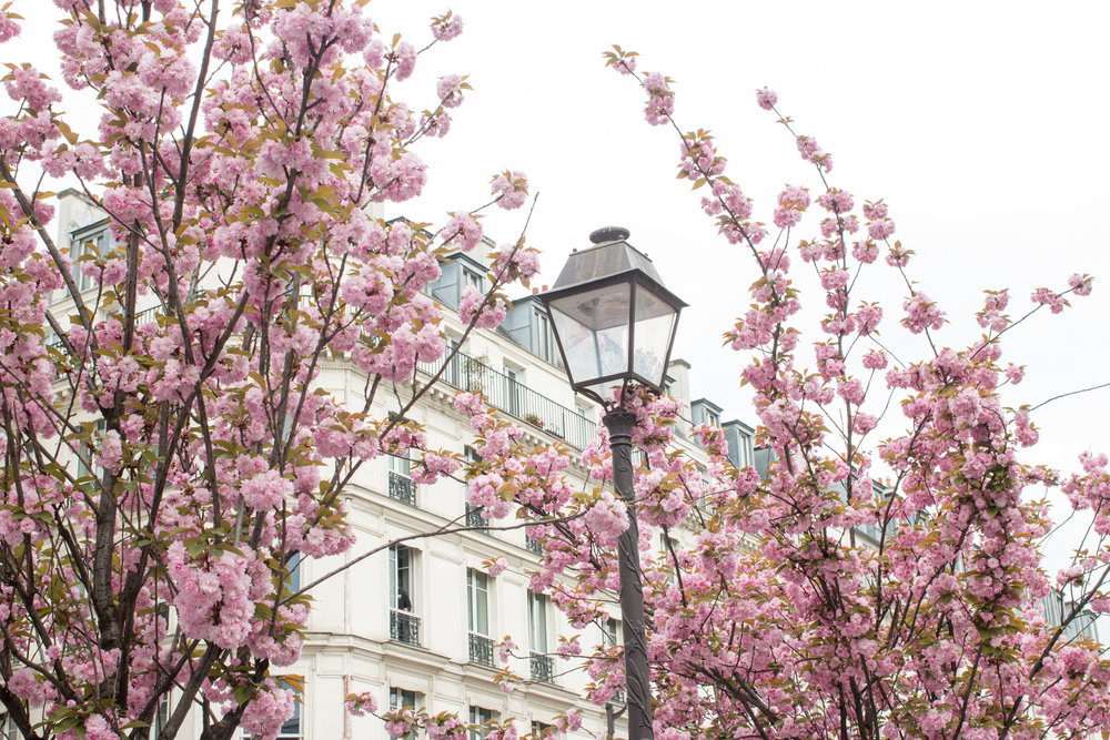 where to see paris in bloom by rebecca plotnick everyday parisian