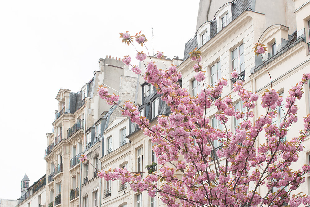 paris in bloom everyday parisian