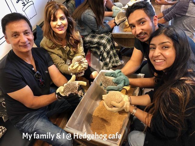 Hedgehog cafe.jpg