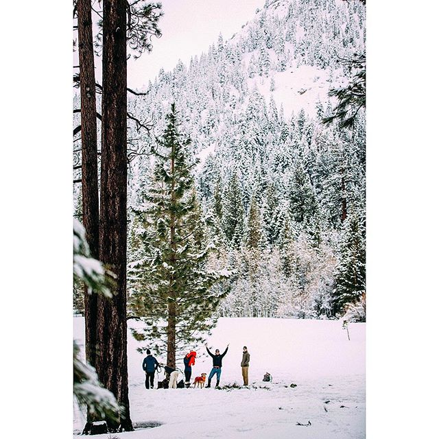 Merry Christmas and Happy Holidays from all of us here at Anomalous Digital! . . . . .  #getoutside #getoutstayout #exploremore #theglobewanderer #letsgosomewhere #campvibes #optoutside #earthfocus #rei1440project #liveoutdoors #travelstoke #nakedplanet  #naturelovers #awesome_earthpix #liveauthentic #thecreative #livefolk #mountainlove #gottalove_a_ #instamountain #nature_perfection #pinetree #ourplanetdaily #californialove #jj_california #californiadreaming #christmas #filmmaking #cali
