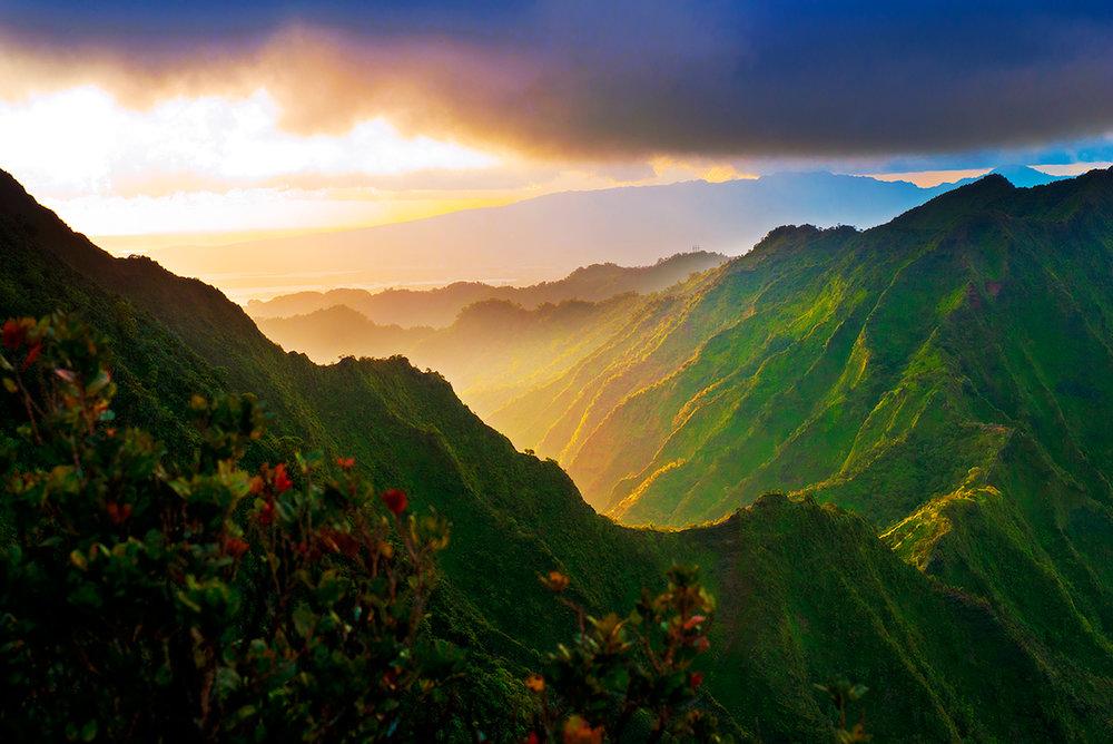 Turtle-Pals-friends-love-aloha-3000px72dpi.jpg