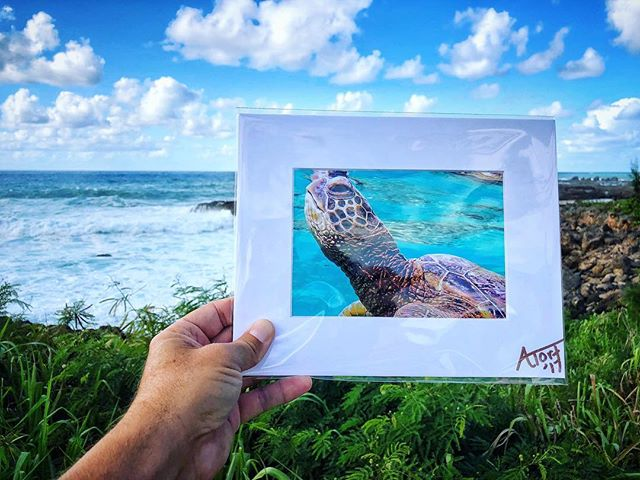 "I have 8 of these 5""x7"" prints in a 8""x10"" matte printed on metallic fine art paper...super visually awesome in person I promise! $35 for 1/$50 for 2 prints. $5 for shipping.  U will have in time for holidays so NO worries.  Al🐢ha and make awesome little gifts.  #alohaturtletours #hawaii #turtles #atortphotography"