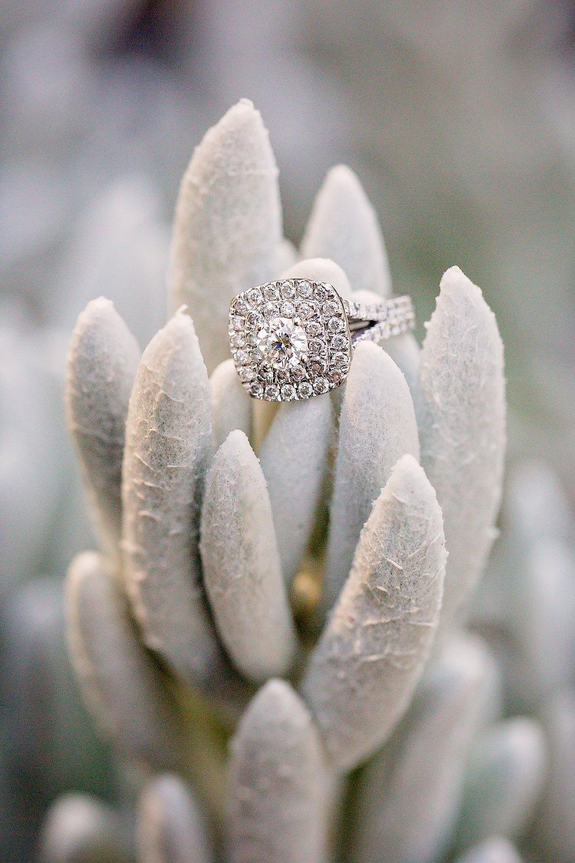 Longwood Gardens engagement photoshoot