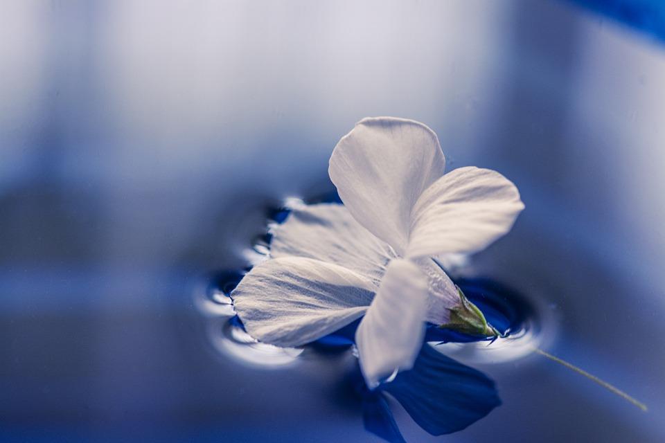 flowers-1167669_960_720.jpg