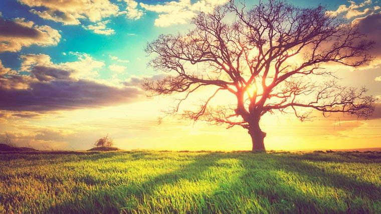 nature-05.jpg
