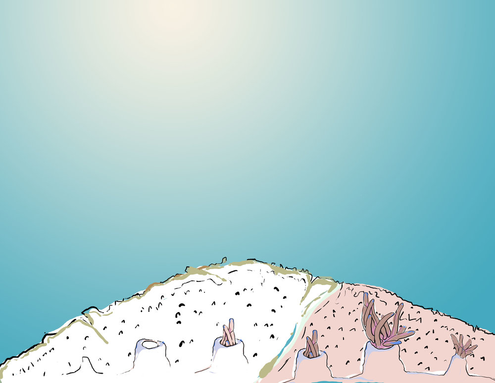 Illustration of coral bleaching. Kate Furby