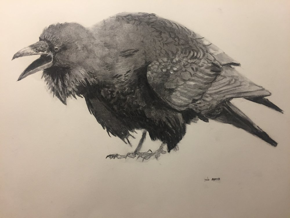"Raven No. 2; Willow Charcoal on Paper; 18""x24""; 2017"