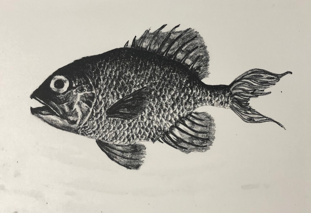 "Fish, 9""x10"", Lithograph, 2018"