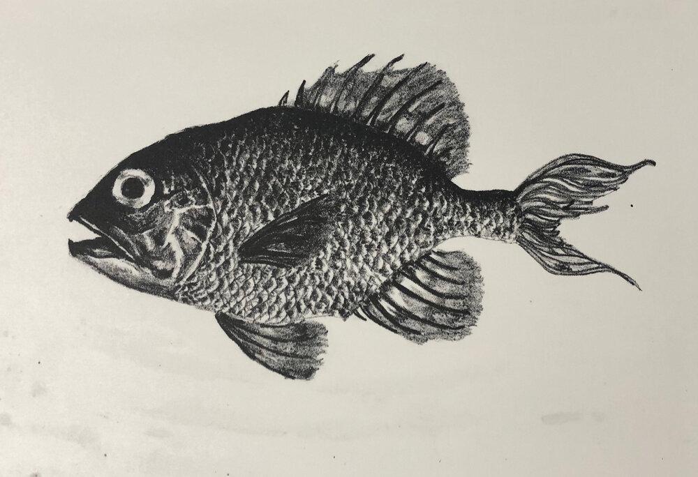 "Fish, 9""x10"", Lithograph, 2018"