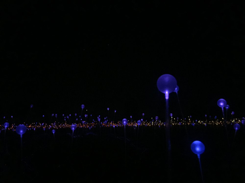 Field of lights, ground level.