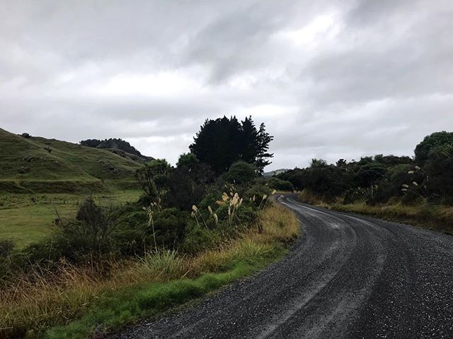 Road. Paddock. Forest. Repeat. . . . #wonderlustnewzealand #adventure #livesimply #gathernomoss #explorer #travelcouple #trampslife #hike #hikingadventures #hiking #wanderlust #adventurealways #womenwhoexplore  #aroundtheworld #newzealand #teararoatrail  #thruhike #wildernessculture #pilgrimandprose #getoutside #sheisnotlost #dametraveler #womenwhohike #trekmove #travelstrapped  #adventuretogether #staywild #followtheroad #atleastitsflat #roadwalking