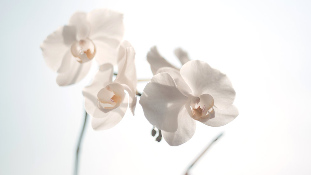 White Flowers | Refreshing, Beauty, Peace, Inspiration, Quotes