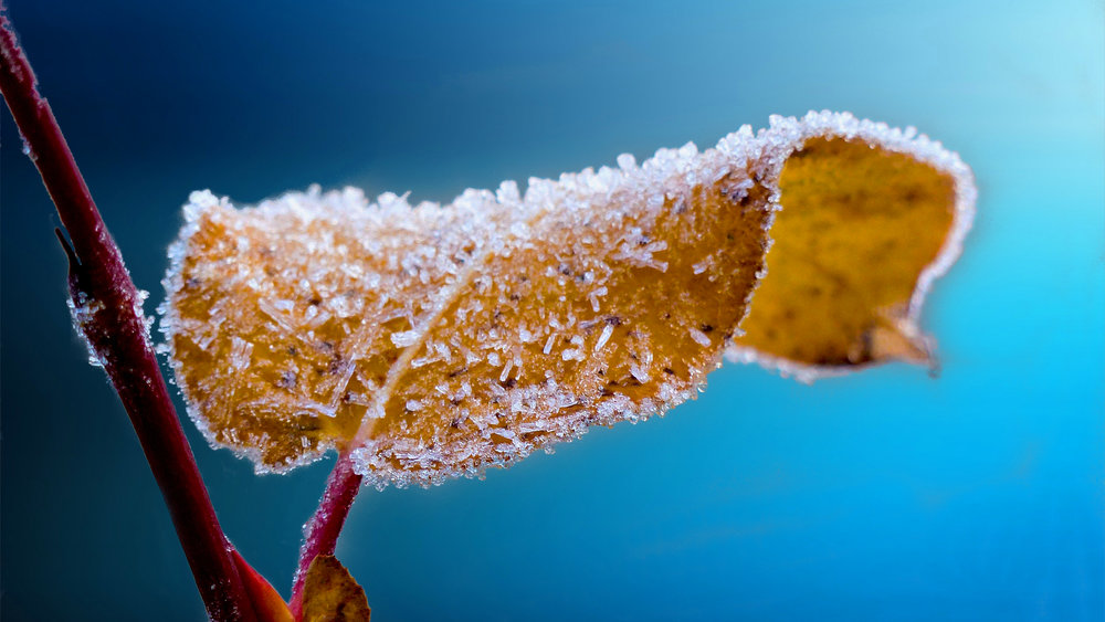 Beautiful Frosted Leaf | Winter | Columbus, Ohio | Peace to the People