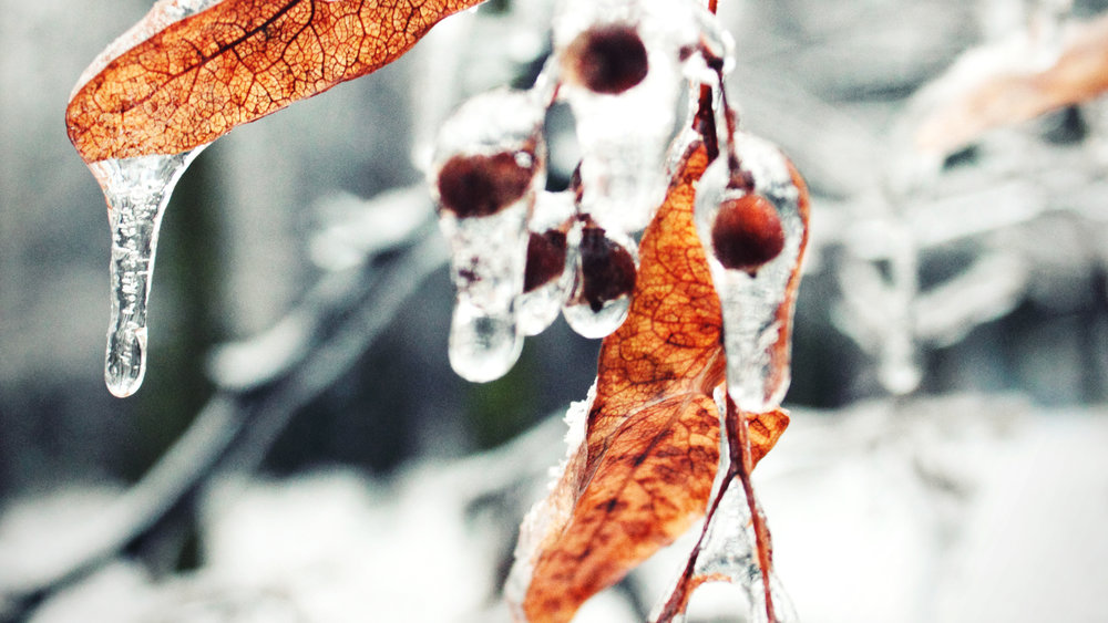 Frozen, Ice, Berries, Nature, Winter, Ohio | Inspiration, Essays, Quotes