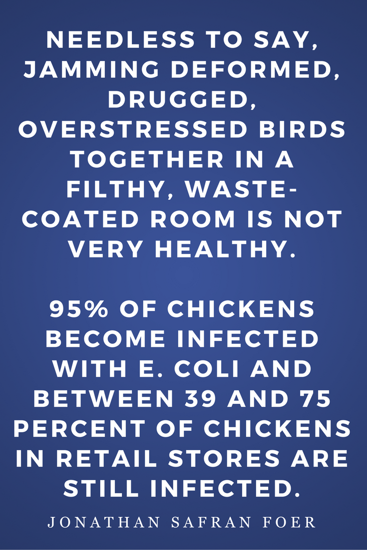 Eating Animals by Jonathan Safran Foer, Diet, Quotes, Books, Inspiration, Chickens