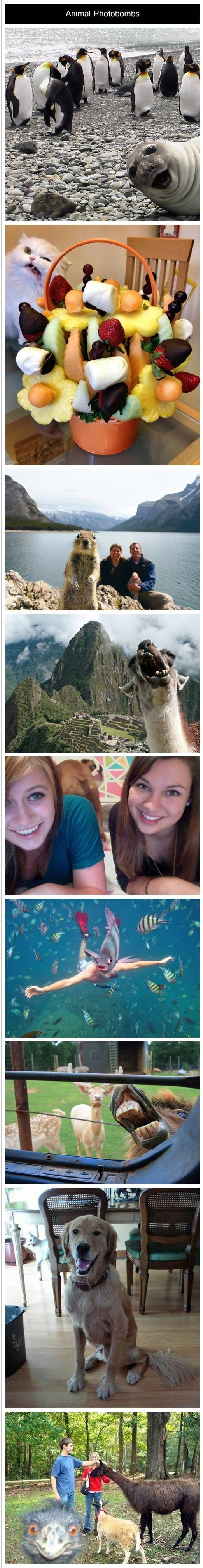 Animal Photobombs | Humor | Pinterest | Hilarious