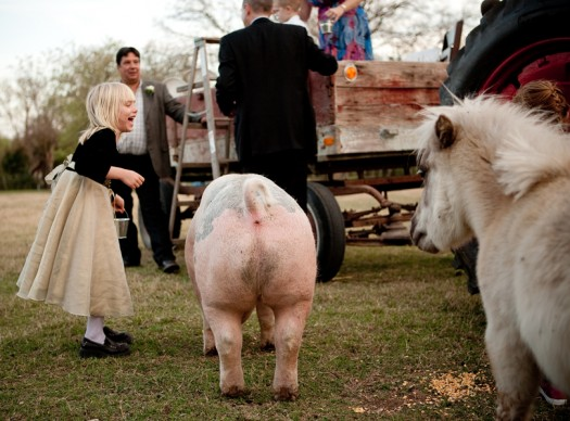 wedding petting zoo